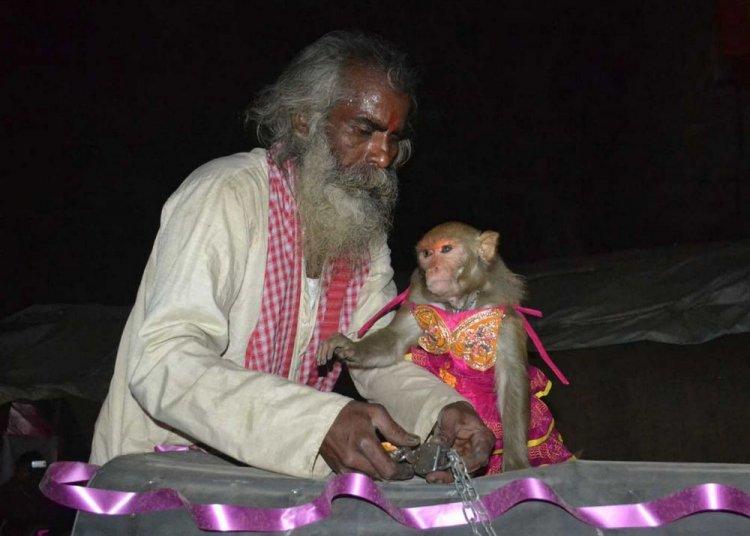 Смотреть фотографии обезьян любительское 3 фотография