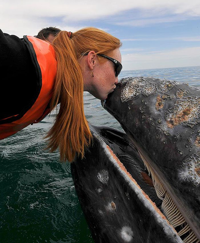 иногда большие киты целуют твою лодку