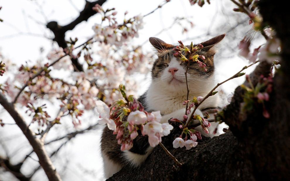 интересные картинки весна днем защитника